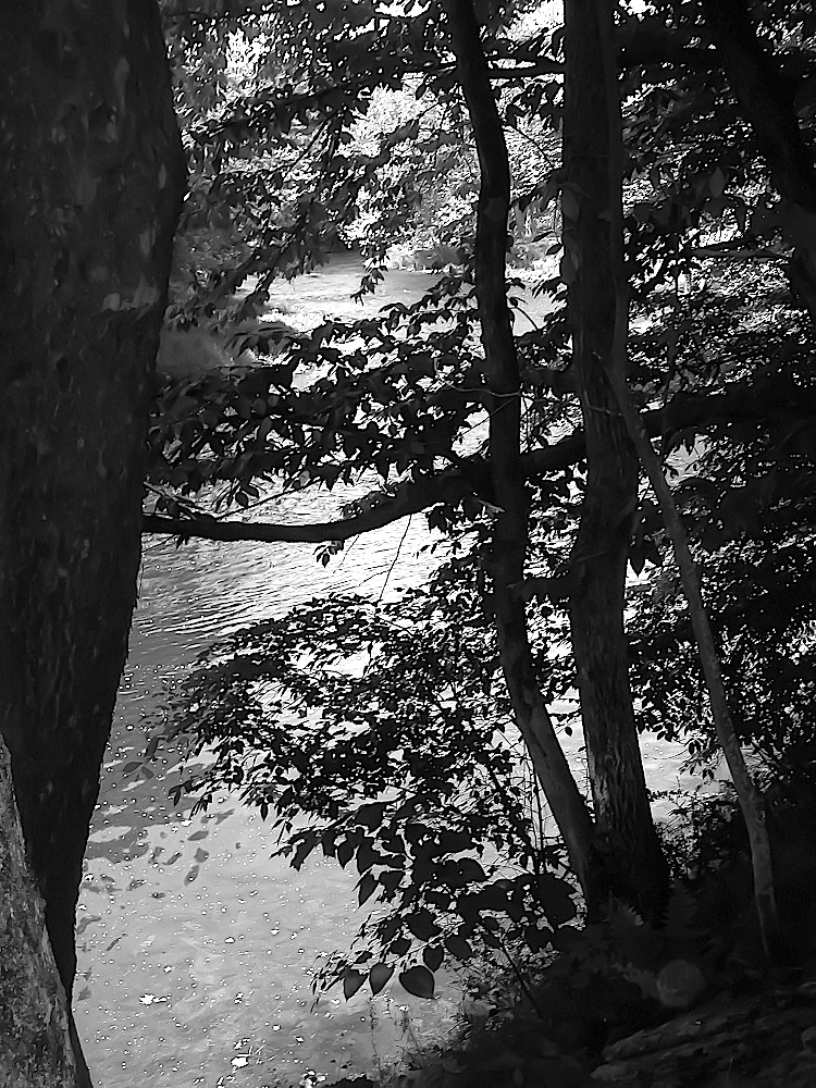 413_24_River_Trees