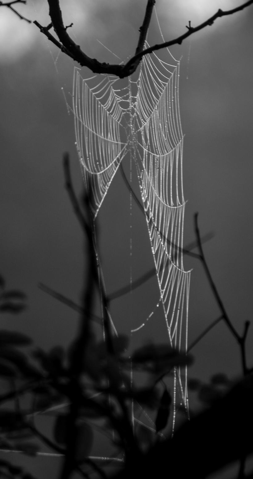 draped-web-0414