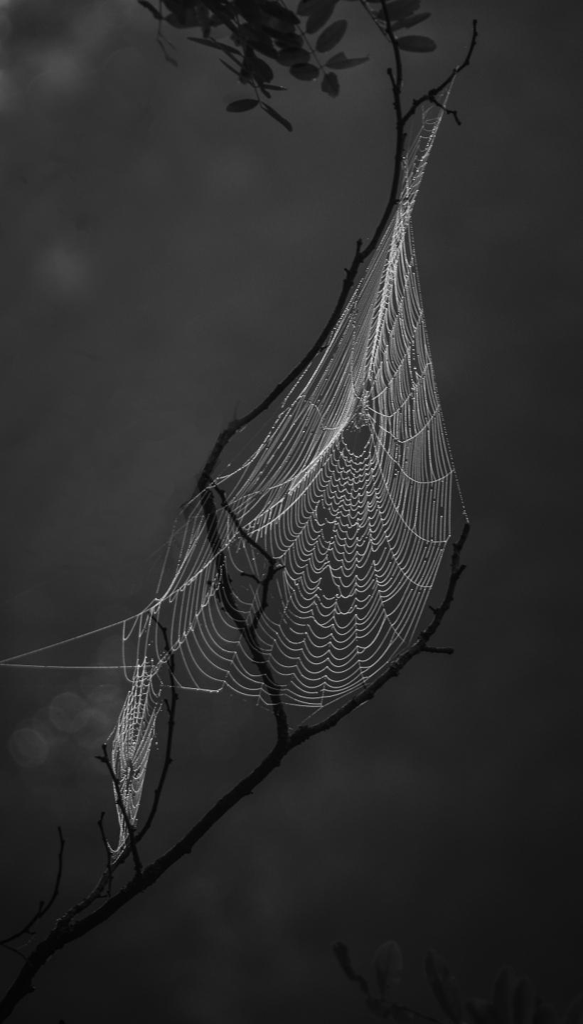 web-twig