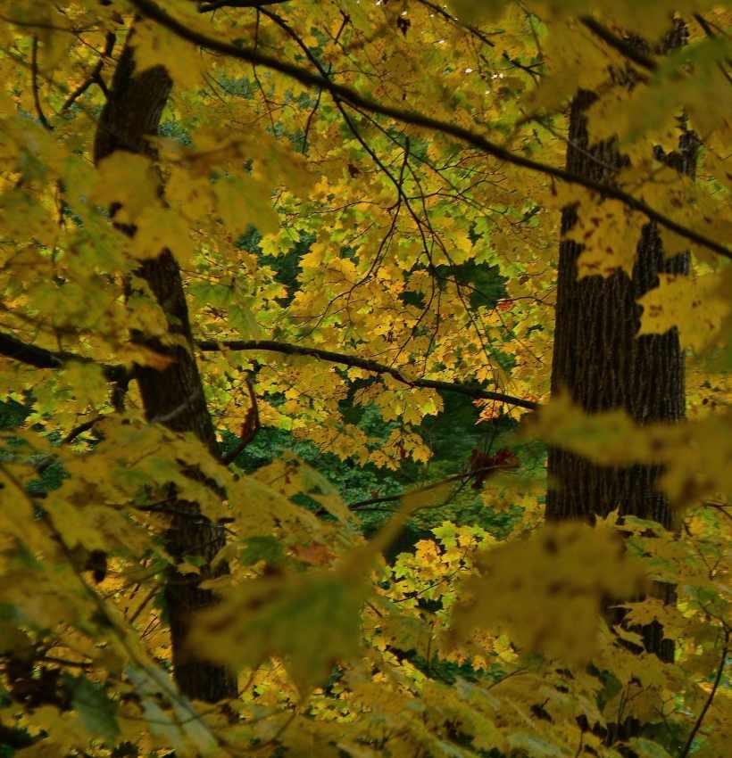 yellow-leaf-window