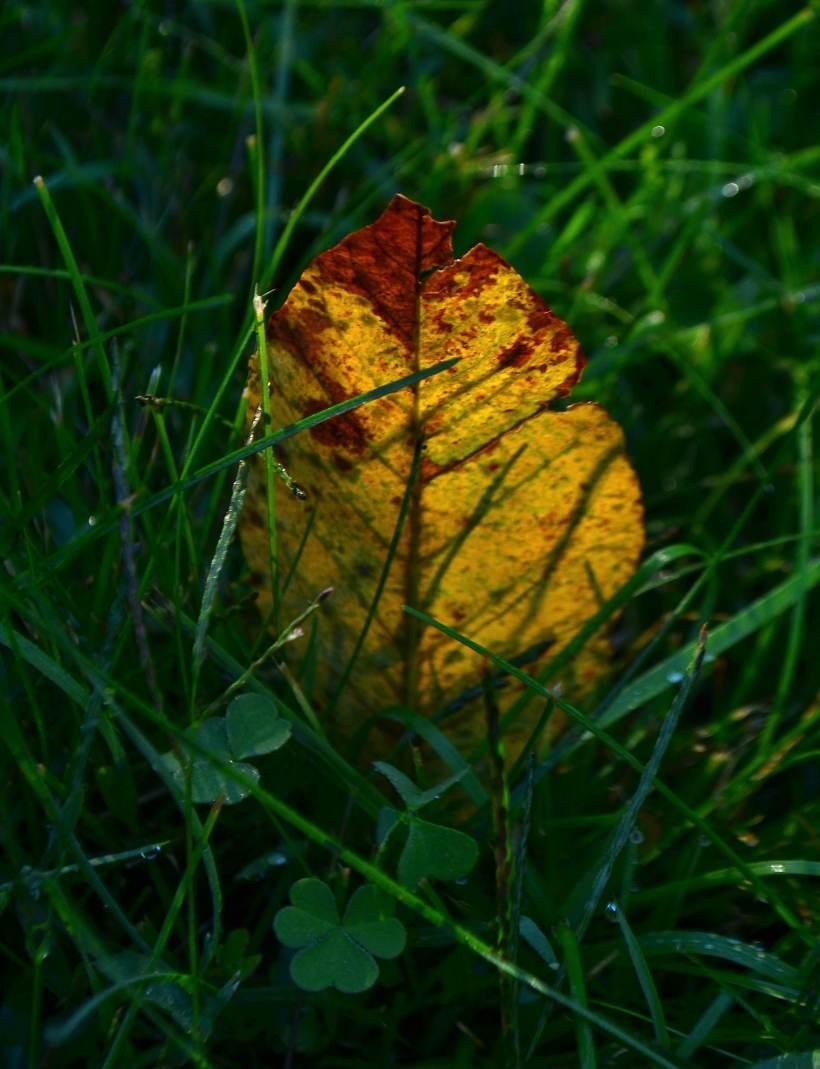 leaf-feather